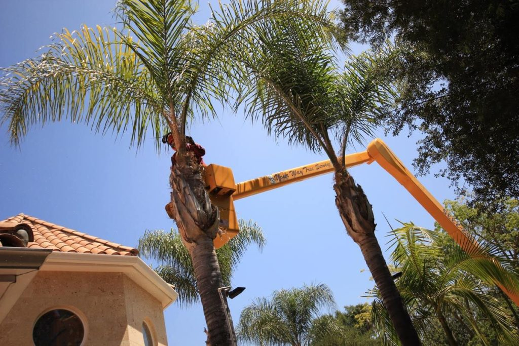 Palm Tree Trimming-Beaumont Tree Trimming and Stump Grinding Services-We Offer Tree Trimming Services, Tree Removal, Tree Pruning, Tree Cutting, Residential and Commercial Tree Trimming Services, Storm Damage, Emergency Tree Removal, Land Clearing, Tree Companies, Tree Care Service, Stump Grinding, and we're the Best Tree Trimming Company Near You Guaranteed!