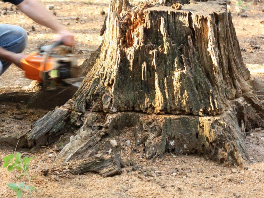 Stump Removal-Beaumont Tree Trimming and Stump Grinding Services-We Offer Tree Trimming Services, Tree Removal, Tree Pruning, Tree Cutting, Residential and Commercial Tree Trimming Services, Storm Damage, Emergency Tree Removal, Land Clearing, Tree Companies, Tree Care Service, Stump Grinding, and we're the Best Tree Trimming Company Near You Guaranteed!