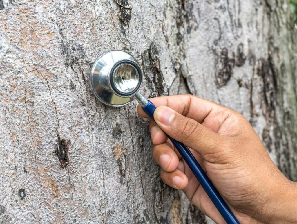 Tree Assessments-Beaumont Tree Trimming and Stump Grinding Services-We Offer Tree Trimming Services, Tree Removal, Tree Pruning, Tree Cutting, Residential and Commercial Tree Trimming Services, Storm Damage, Emergency Tree Removal, Land Clearing, Tree Companies, Tree Care Service, Stump Grinding, and we're the Best Tree Trimming Company Near You Guaranteed!