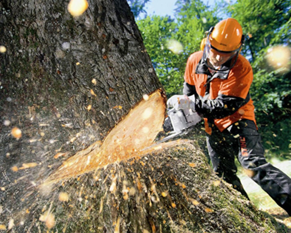 Tree Cutting-Beaumont Tree Trimming and Stump Grinding Services-We Offer Tree Trimming Services, Tree Removal, Tree Pruning, Tree Cutting, Residential and Commercial Tree Trimming Services, Storm Damage, Emergency Tree Removal, Land Clearing, Tree Companies, Tree Care Service, Stump Grinding, and we're the Best Tree Trimming Company Near You Guaranteed!