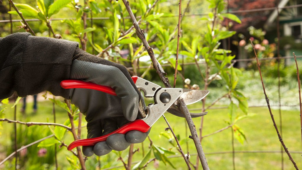 Tree Pruning-Beaumont Tree Trimming and Stump Grinding Services-We Offer Tree Trimming Services, Tree Removal, Tree Pruning, Tree Cutting, Residential and Commercial Tree Trimming Services, Storm Damage, Emergency Tree Removal, Land Clearing, Tree Companies, Tree Care Service, Stump Grinding, and we're the Best Tree Trimming Company Near You Guaranteed!