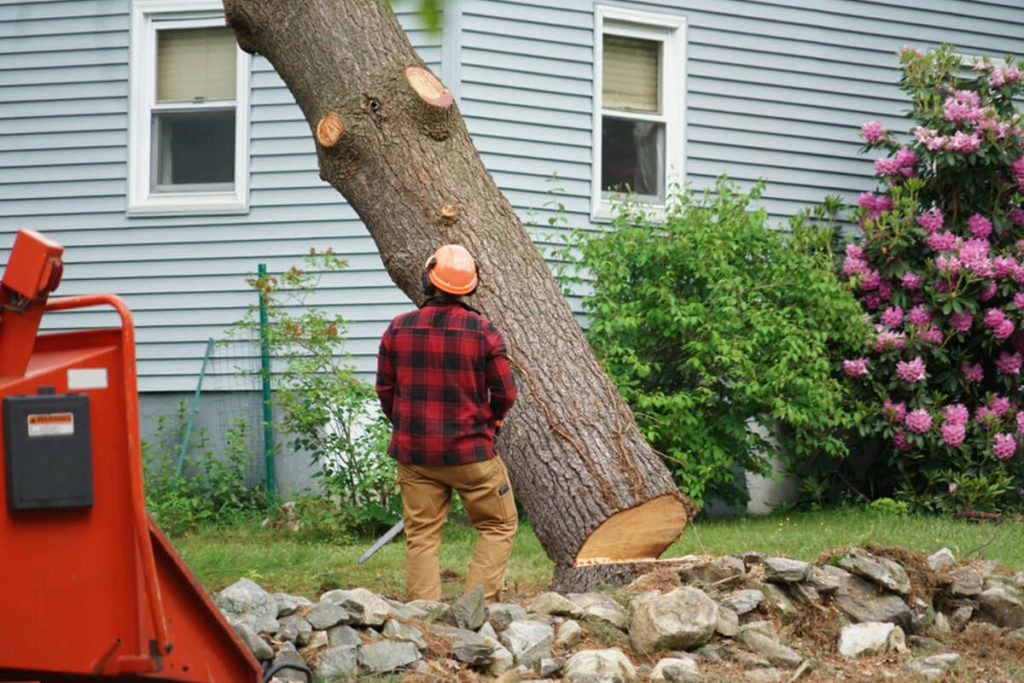 Tree Removal-Beaumont Tree Trimming and Stump Grinding Services-We Offer Tree Trimming Services, Tree Removal, Tree Pruning, Tree Cutting, Residential and Commercial Tree Trimming Services, Storm Damage, Emergency Tree Removal, Land Clearing, Tree Companies, Tree Care Service, Stump Grinding, and we're the Best Tree Trimming Company Near You Guaranteed!