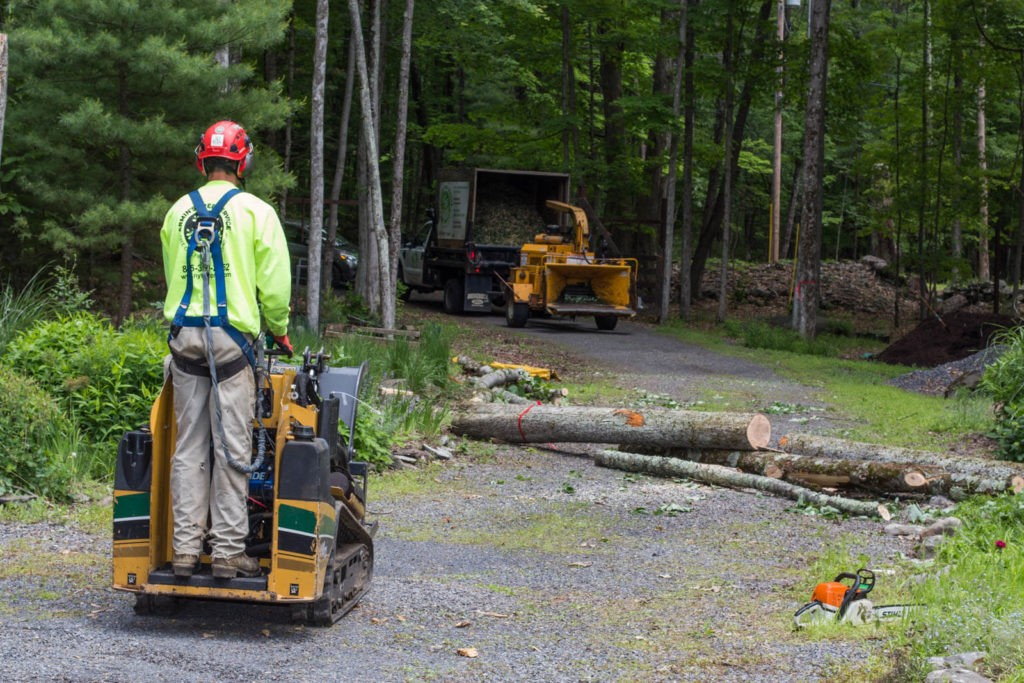 Emergency Tree Removal-Beaumont Tree Trimming and Stump Grinding Services-We Offer Tree Trimming Services, Tree Removal, Tree Pruning, Tree Cutting, Residential and Commercial Tree Trimming Services, Storm Damage, Emergency Tree Removal, Land Clearing, Tree Companies, Tree Care Service, Stump Grinding, and we're the Best Tree Trimming Company Near You Guaranteed!