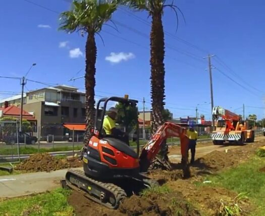Palm Tree Removal-Beaumont Tree Trimming and Stump Grinding Services-We Offer Tree Trimming Services, Tree Removal, Tree Pruning, Tree Cutting, Residential and Commercial Tree Trimming Services, Storm Damage, Emergency Tree Removal, Land Clearing, Tree Companies, Tree Care Service, Stump Grinding, and we're the Best Tree Trimming Company Near You Guaranteed!