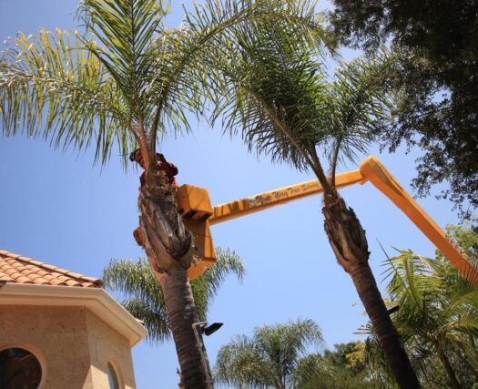 Palm Tree Trimming and Removal-Beaumont Tree Trimming and Stump Grinding Services-We Offer Tree Trimming Services, Tree Removal, Tree Pruning, Tree Cutting, Residential and Commercial Tree Trimming Services, Storm Damage, Emergency Tree Removal, Land Clearing, Tree Companies, Tree Care Service, Stump Grinding, and we're the Best Tree Trimming Company Near You Guaranteed!