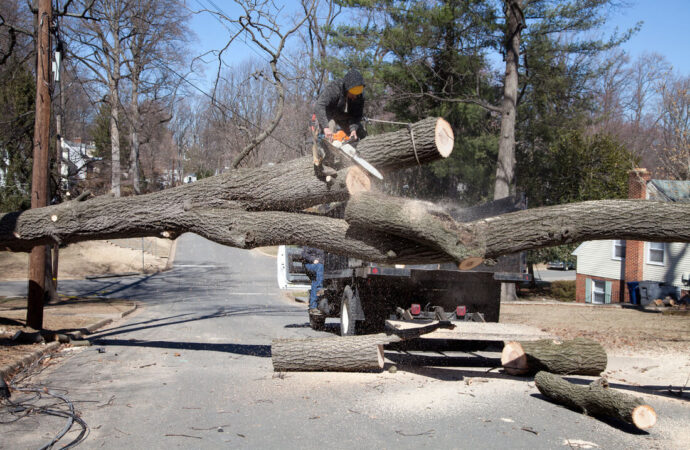 Residential Tree Services-Beaumont Tree Trimming and Stump Grinding Services-We Offer Tree Trimming Services, Tree Removal, Tree Pruning, Tree Cutting, Residential and Commercial Tree Trimming Services, Storm Damage, Emergency Tree Removal, Land Clearing, Tree Companies, Tree Care Service, Stump Grinding, and we're the Best Tree Trimming Company Near You Guaranteed!