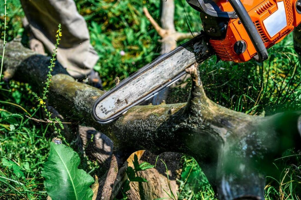 Services-Beaumont Tree Trimming and Stump Grinding Services-We Offer Tree Trimming Services, Tree Removal, Tree Pruning, Tree Cutting, Residential and Commercial Tree Trimming Services, Storm Damage, Emergency Tree Removal, Land Clearing, Tree Companies, Tree Care Service, Stump Grinding, and we're the Best Tree Trimming Company Near You Guaranteed!