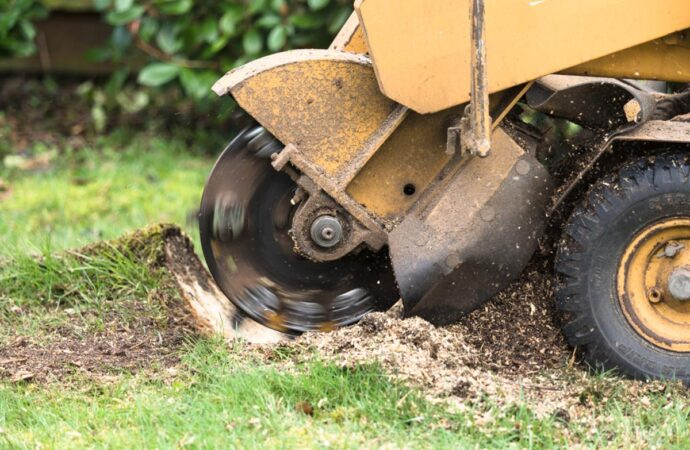Stump Grinding-Beaumont Tree Trimming and Stump Grinding Services-We Offer Tree Trimming Services, Tree Removal, Tree Pruning, Tree Cutting, Residential and Commercial Tree Trimming Services, Storm Damage, Emergency Tree Removal, Land Clearing, Tree Companies, Tree Care Service, Stump Grinding, and we're the Best Tree Trimming Company Near You Guaranteed!