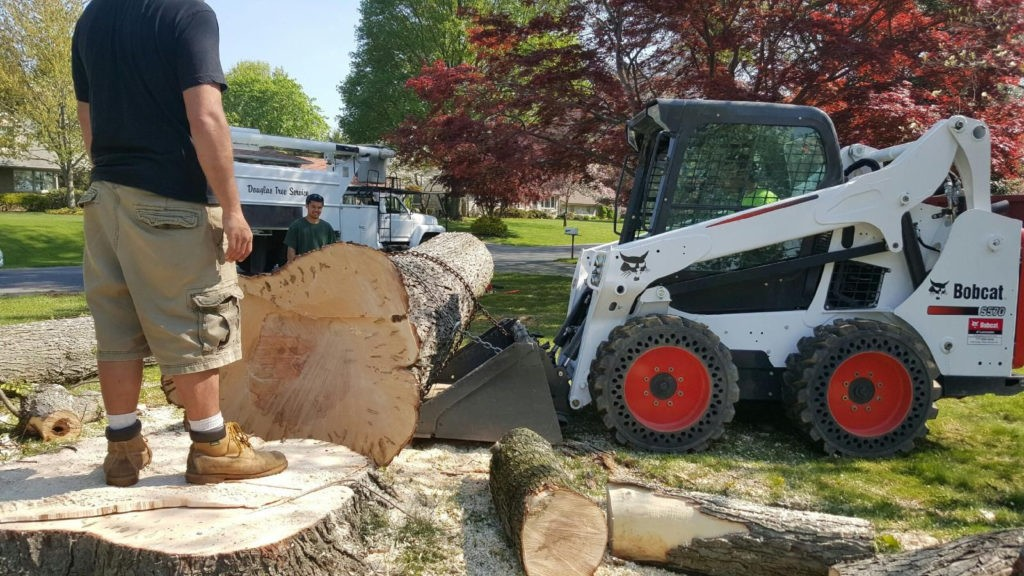 Rose City-Beaumont Tree Trimming and Stump Grinding Services-We Offer Tree Trimming Services, Tree Removal, Tree Pruning, Tree Cutting, Residential and Commercial Tree Trimming Services, Storm Damage, Emergency Tree Removal, Land Clearing, Tree Companies, Tree Care Service, Stump Grinding, and we're the Best Tree Trimming Company Near You Guaranteed!