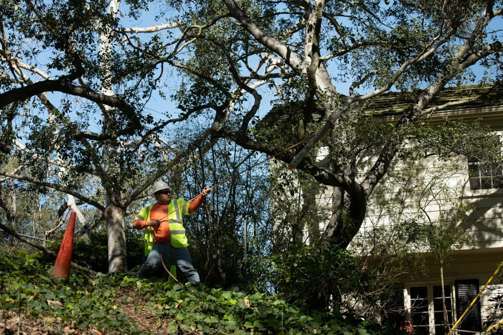 Vidor-Beaumont Tree Trimming and Stump Grinding Services-We Offer Tree Trimming Services, Tree Removal, Tree Pruning, Tree Cutting, Residential and Commercial Tree Trimming Services, Storm Damage, Emergency Tree Removal, Land Clearing, Tree Companies, Tree Care Service, Stump Grinding, and we're the Best Tree Trimming Company Near You Guaranteed!